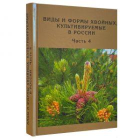 Виды и формы хвойных, культивируемые в России