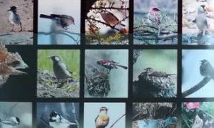 Выставка «Птицы вокруг нас»-миниатюра