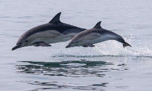 Выставка Всемирный день китов и дельфинов-миниатюра